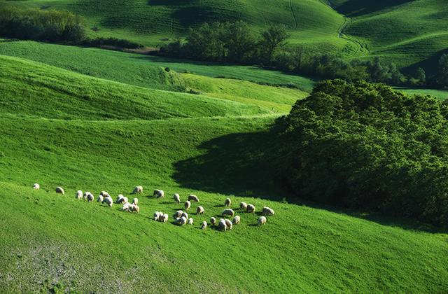 トスカーナ 羊