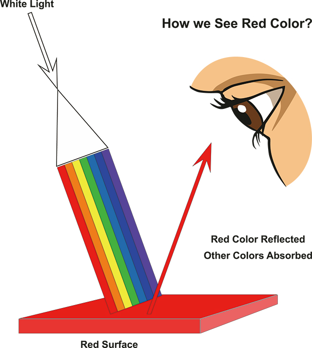 色の見え方
